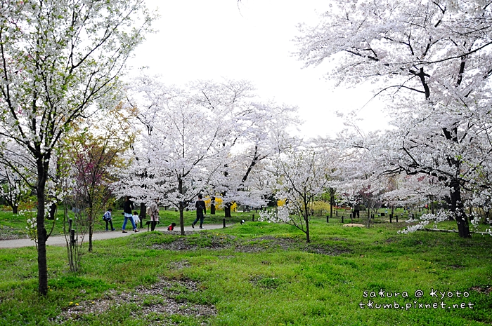 京都府立植物園 (5).jpg