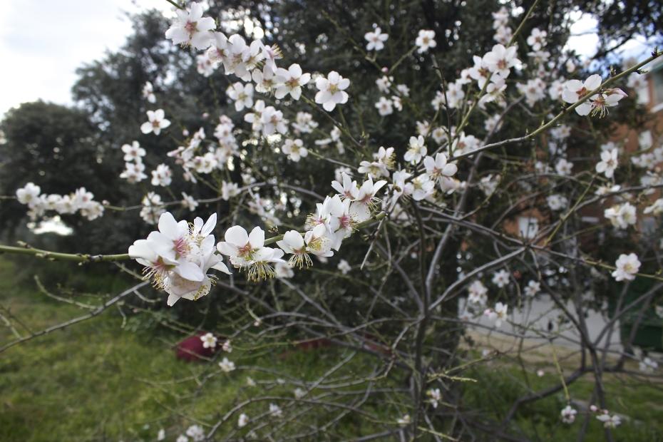 lara-vazquez-style-spring-flowers-almod tree