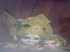 Jai Shree Radhe-Krishna