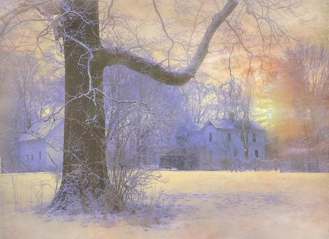 дома, зима, деревья