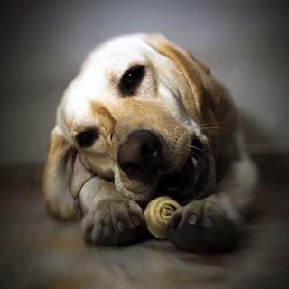 El perro de Jorge