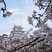 Himeji Castle among the Cherry Blossoms