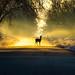 Morning Light by Bernie Duhamel