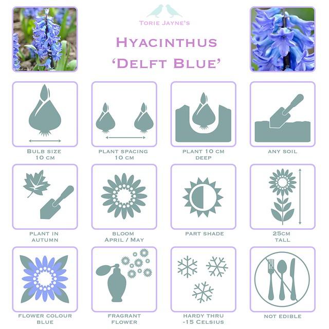 Hyacinth Delft Blue details