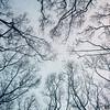 02-Winter's-Bone - Copy