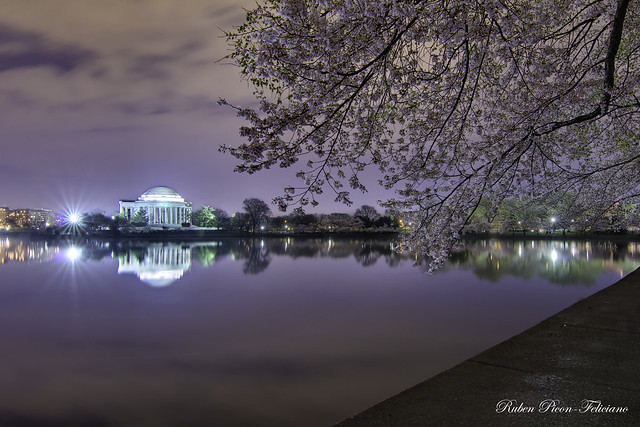 Jefferson Memorial - Tidal Basin with Cherry Blossoms