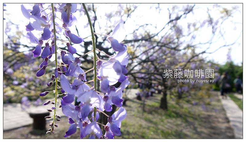 紫藤咖啡園 08