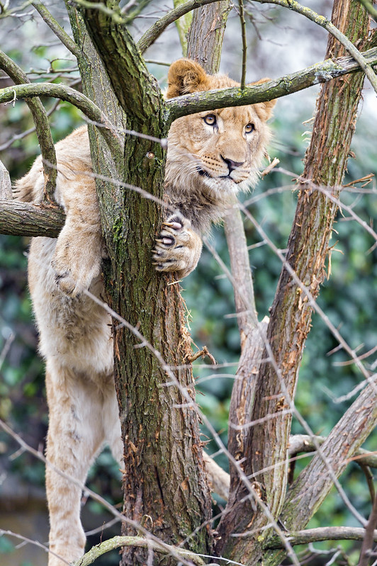 Climbing on the tree...