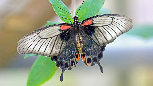 Schmetterlingshaus im Maximilianpark Hamm...