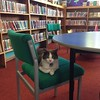 Library cat.