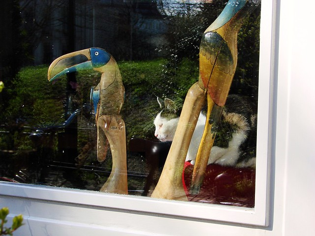 Cat and Birds