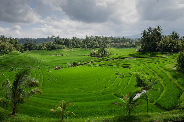 photo of rice paddies