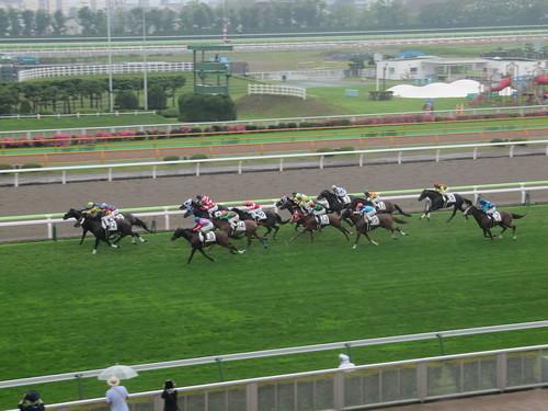 雨の函館競馬場