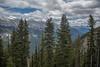 Sulphur Mountain Trees