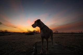 Sunrise Dane