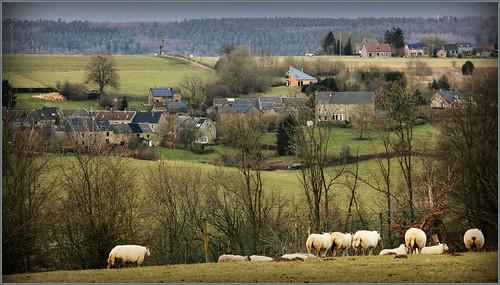 nature belgium belgique paysage moutons wallonie sprimont provincedeliège voiedumoulin betgné