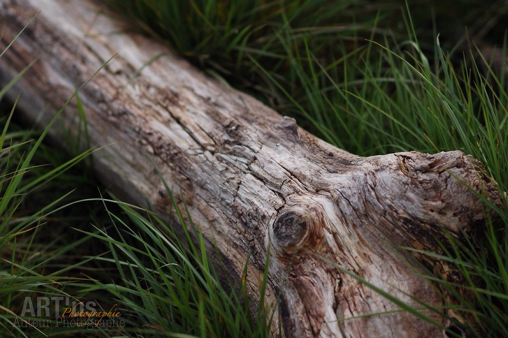 De bois