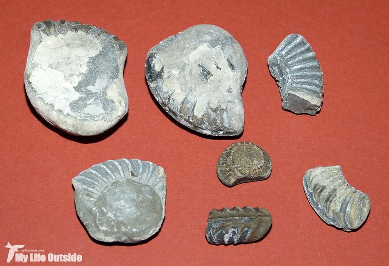 P1120119 - Lyme Regis Fossils