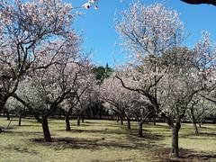 Madrid: La Quinta de los Molinos