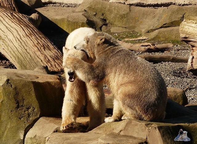 Zoo am Meer 08.03.2015  116