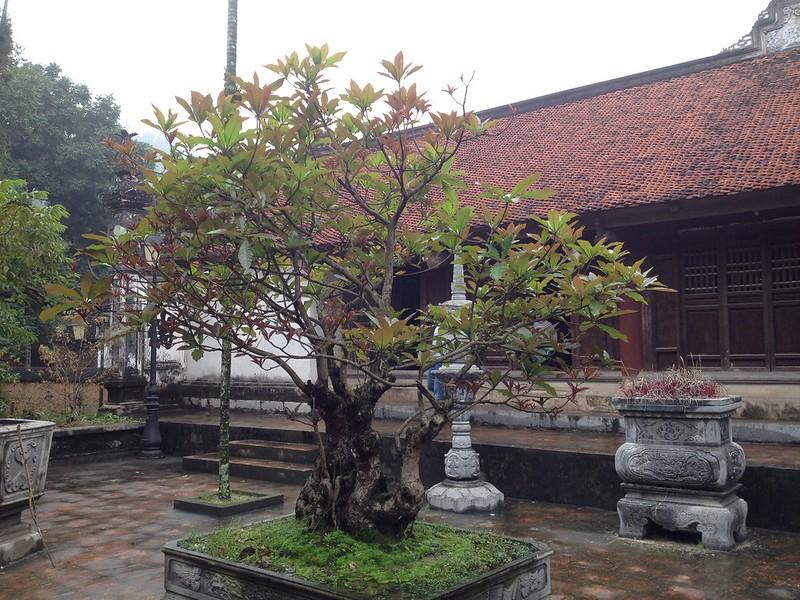 Bo Da Pagoda (45)