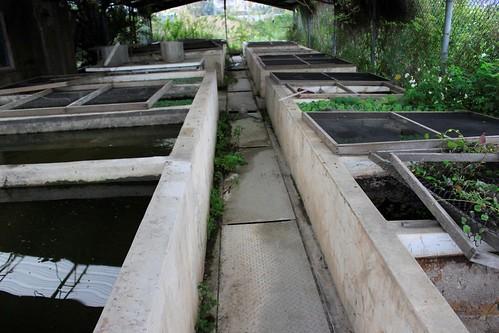 竹北水試所過去保存台灣白魚的保種池,現已移作他用。(圖片攝影:羅聿)
