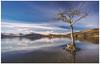 Tree at Millarochy Bay, Loch Lomond