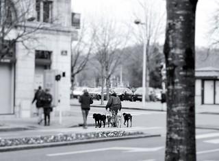 The Lord of the dogs. - El señor de los perros.