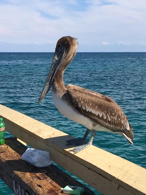 Pelican Grand Beach Resort Room