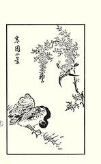 Heavenly bamboo, brown-eared bulbul and mallard duck