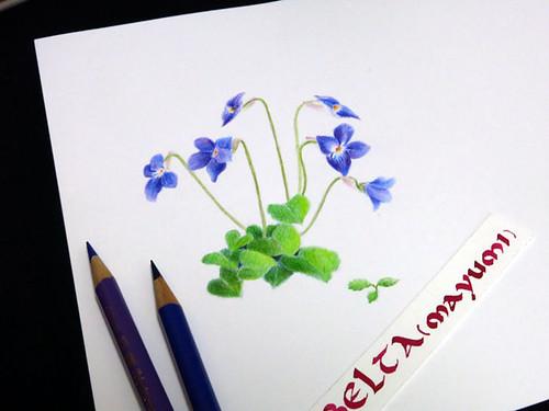 2015_04_06_violet_01_s