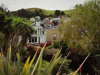 79/365: Spring Has Arrived in San Francisco // Bernalwood Project 365 2015 In 365 Photos at Peralta Mini Park