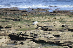 Seal on St Mary's Island