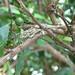 Coffee farm chameleon by ijbarton