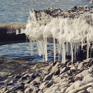 Lakeshore icicles.