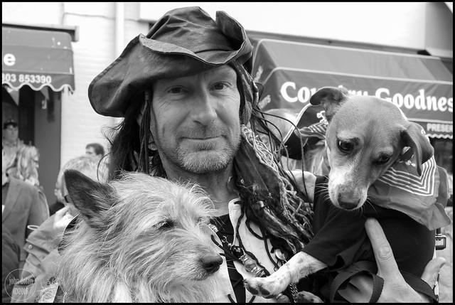 sea dogs | brixham