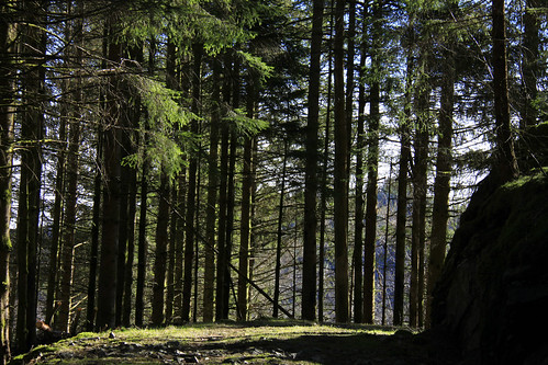 mars primavera norway forest march photo spring foto sunday skandinavien skog noruega gran scandinavia rein frühling vår vestlandet noreg march15 norvège forår fusa 2015 dese skandinavia norwegianwood scandinavie strandvik skandinavija granskog sundag fusakommune hordalandfylke desefoto