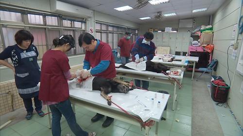 台灣之心愛護動物協會下鄉進行絕育與教育推廣