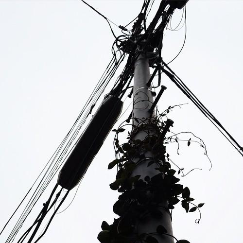 蔦が這いのぼる #都電pw2015