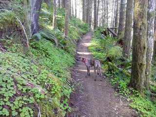 Lucy on the Gravelle Brothers Trail