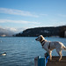 Dog - Annecy Lake by Romain Fontaine