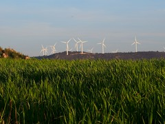 prairie, agriculture, farm, horizon, windmill, field, grass, sunlight, plain, wind, wind farm, natural environment, paddy field, crop, meadow, landscape, rural area, wind turbine, grassland,