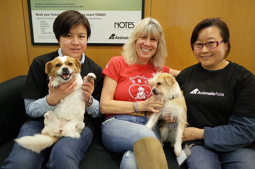 Lelly, Muddie with Jill and Animals Asia staff at Hong Kong office