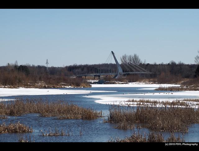Sawmill Creek Reconstructed Wetland