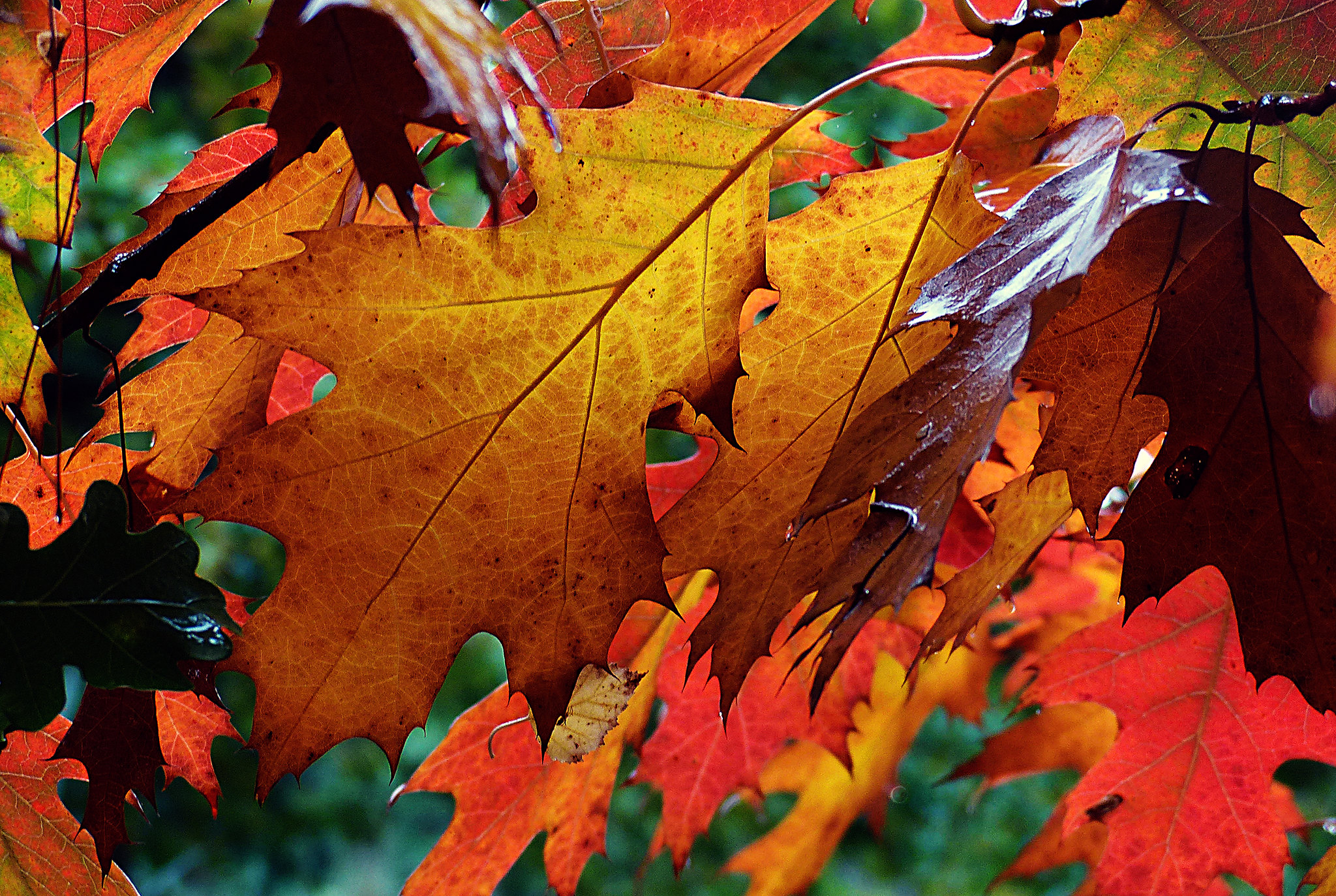 Autumn Hues.