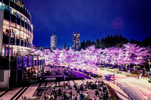 Tokyo Midtown at SAKURA Night