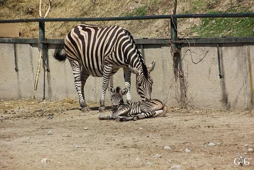 Zoo Bratislava 18.04.201579