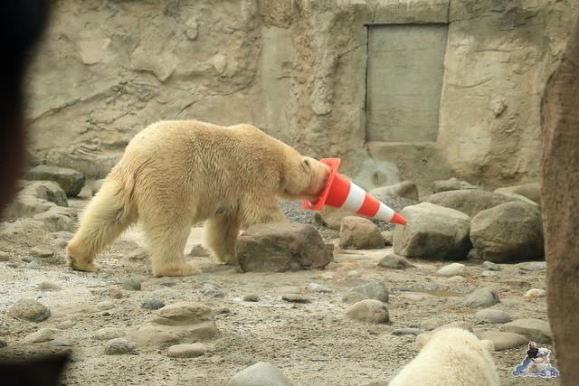 Eisbär Lili im Zoo am Meer Bremerhaven 14.05.2016 Teil 2 06