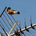 antenna bird