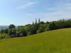 iarba verde de acasă/green grass of home